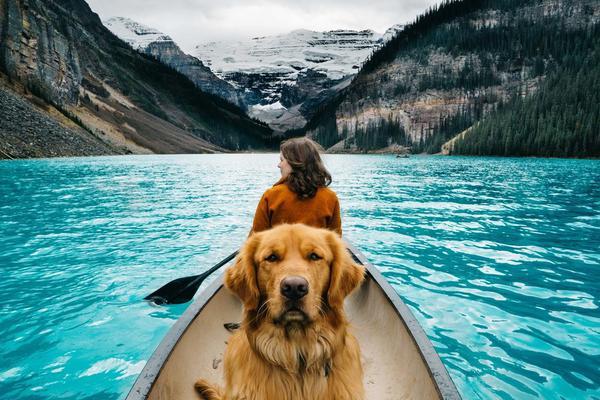 五一出游季带着宠物去旅行 跟动物界旅游达人比我真是弱爆了