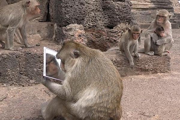 奇妙!猴子拿走游客镜子 认真观察镜中的自己