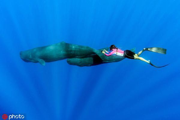 """""""吸碳高手""""鲸鱼数量越来越少 盘点鲸鱼与人类的友爱互动"""