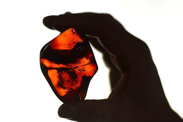 英国拍卖一组精美琥珀:保存侏罗纪未知有翼生物