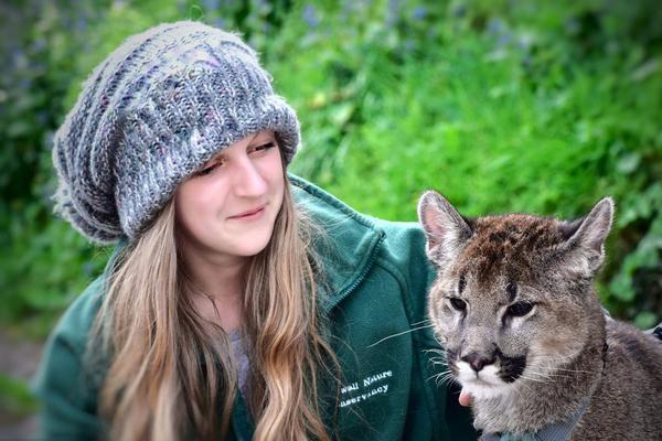 英国姑娘领养美洲狮 把猛兽撸成了卖萌小可爱