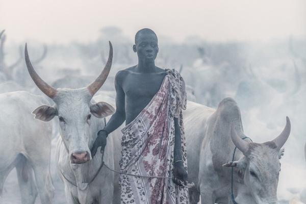 """遥远非洲游牧部落纪实 """"奇特""""的南苏丹人与牛群共眠"""