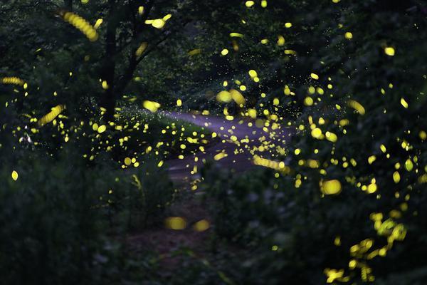萤火虫夏夜飞舞 山林成梦幻世界