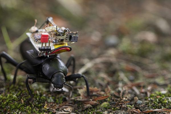 新款微型摄像机可装在甲虫背部:总重量只有250mg