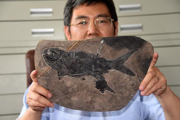 """中国科学家发现2.44亿年前最大基干辐鳍鱼类""""张氏翼鳕"""""""