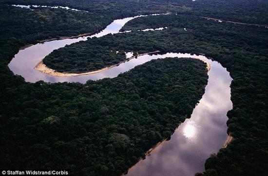 亚马逊河河水浑浊,长满各种水草,为鱼类提供了丰富的藏身之所。因此,当电鳗从这些地方滑行而过时,它就会释放两三毫秒长的短时脉冲,找到猎物的所在地。
