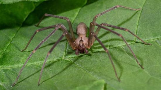 我们会在睡觉时吞下蜘蛛?对人类实际毫无兴趣