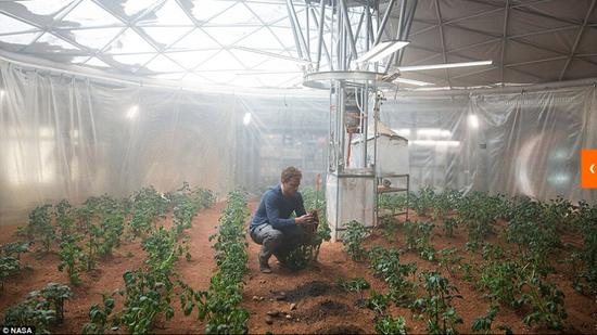 马克和他的火星农场,他正在测量土豆的长势。马克身边的是自制的用火箭燃料N2H2生产水的装置