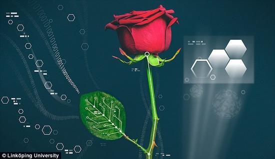瑞典科学家的研究提供了新的可能性,包括控制植物的生长和其他内部的功能。