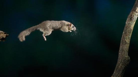 所有冬眠的动物似乎每年生殖频率都降低了,但更长寿了.