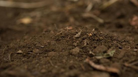 对于很多生命而言,土壤都是它们生存的必须