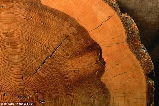 """就像树干的中心部分始终保持不变一样,所有现代核糖体的""""核心部位""""也都保留着38亿年前的样子。核糖体所记录的历史能够揭示生物在过去数十亿年间经历了怎样的变化。此外,它还能帮助我们了解生物诞生时地球上的环境条件,并帮助我们寻找外星生命"""