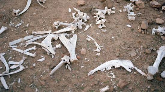 专家们能够快速判断这些骨骼来自哪种动物。