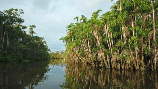 亚马逊地区是众多神奇动物的家园