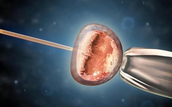 图3 小鼠胚胎显微注射(资料图)