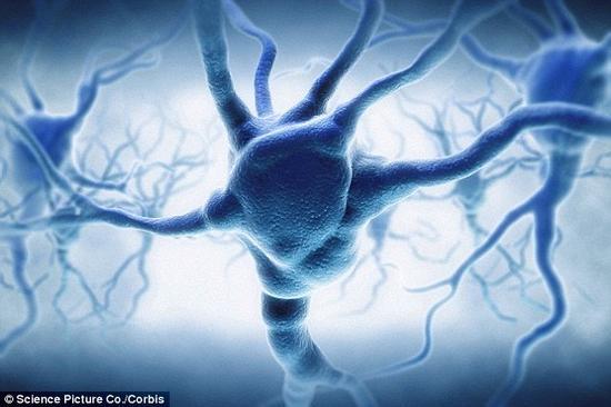 美国索尔克生物学研究所科学家近日对人类大脑突触的存储容量进行测量发现,平均一个突触能够存储大约4.7比特的信息数据。这就意味着人类大脑的信息存储容量至少为1帕字节,即1千万亿字节,这一容量比此前想象认为的人类大脑信息存储容量要大10倍。