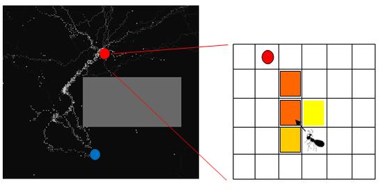 蚂蚁觅食的计算机模拟,白点表示蚂蚁,灰点表示信息素,红点表示食物,蓝点表示巢穴,灰色的方框是障碍物,将红点附近的区域放大得到右图。可以到 http://www.swarmagents.cn/javaclass/ant.htm  观看模拟结果。