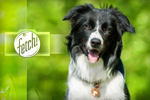 微软推狗脸识别App:根据照片辨别狗狗品种