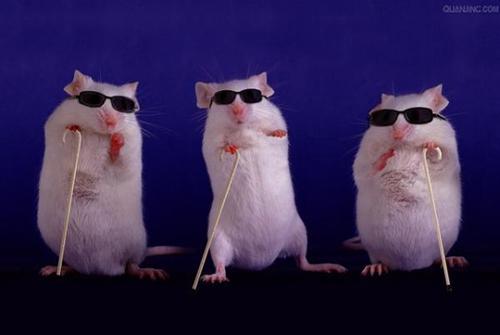视网膜退化致盲小鼠模型示意图