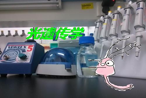 神经元君和他的实验室