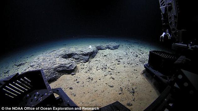 """此次发现的确切深度为4290米。""""深海发现者""""拍摄了这只章鱼的精细图片,使研究者确认它属于无鳍亚目。"""