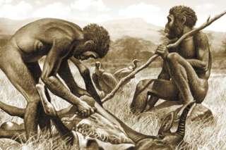 由于饮食中加入了肉类,早期人类减少了对大型咀嚼肌的需求