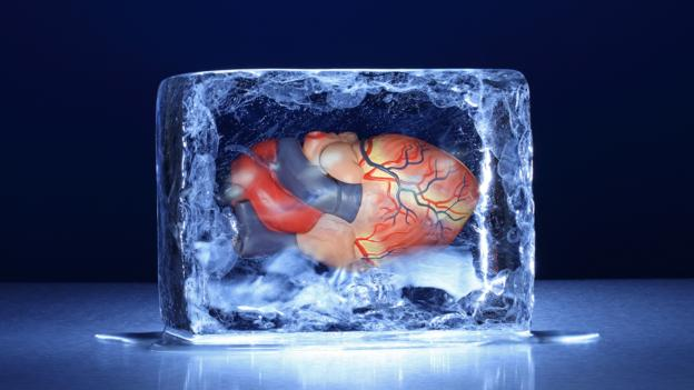 人体冷冻保存技术能否成功,目前还不清楚