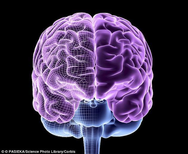 如果意识实际上是从一个高度整合的网络中突然出现的特征,那么所有的复杂系统——包括所有具有大脑的生物——都可能具有某种最低限度的意识形式。