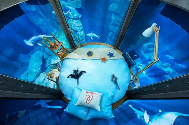 这间Airbnb屋主想让你住在水下和鲨鱼做室友