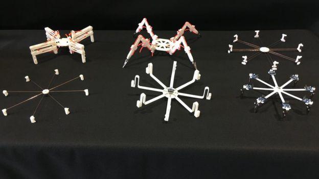 研究团队制作了一批人造蜘蛛用于不同的实验。