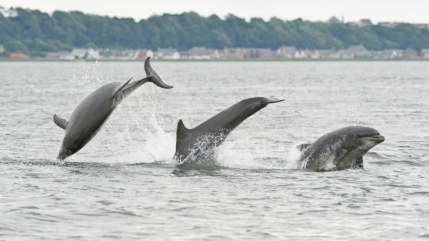 一些海豚会谋杀竞争对手