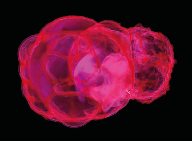 图为本地泡中铁-60分布情况的电脑模型,X即太阳系所在位置。