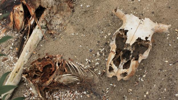 图为一片冷却湖岸边留下的动物遗骸。