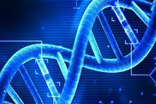 基因治疗抗衰老首获成功:减轻肌肉质量及干细胞损耗