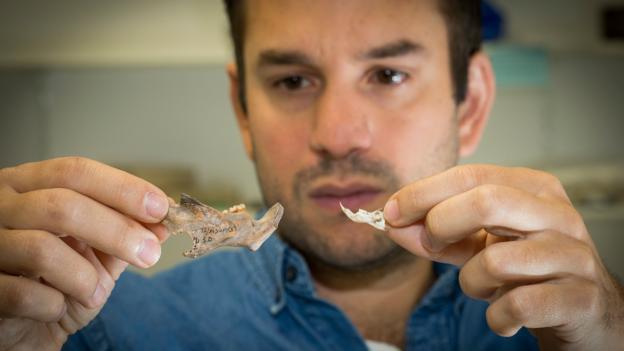朱利恩·路易斯(Julien Louys)拿着他们团队发现的两块老鼠化石