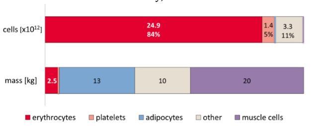 不同类型细胞的数量和质量占比,从左到右依次为:红细胞、血小板、脂肪细胞、其他以及肌肉细胞。