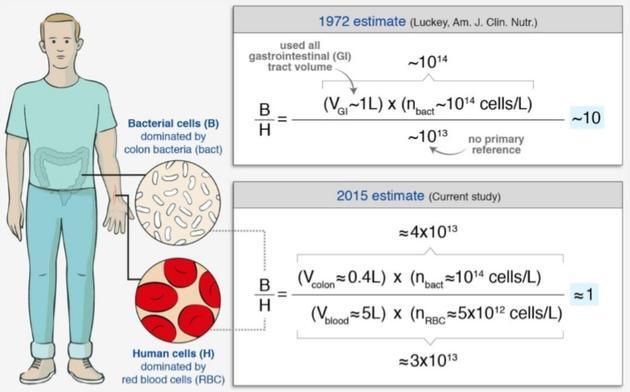 """新老版本""""细菌细胞比""""的估算数据比较"""