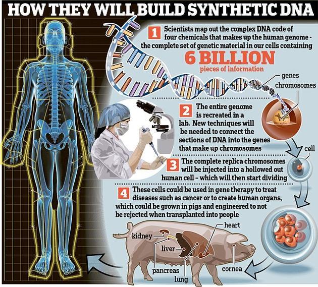 科学家近日宣布了一个里程碑式的计划,将在十年内重建全部的人体细胞。如果这一项目获得成功,将极大地推进对癌症等疾病的研究,甚至能满足日益增长的移植器官需求。