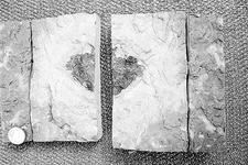 4.7亿年前新型陨石首次现身 或将帮助重塑陨石历史