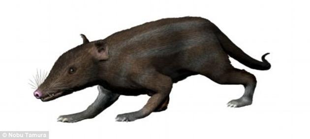研究人员将恐龙灭绝前后胎盘哺乳动物的平均进化速度进行了对比分析。已知最古老的胎盘哺乳动物是中华侏罗兽。这是真兽亚纲的一个分支,生活于大约1.6亿年前的侏罗纪时期。
