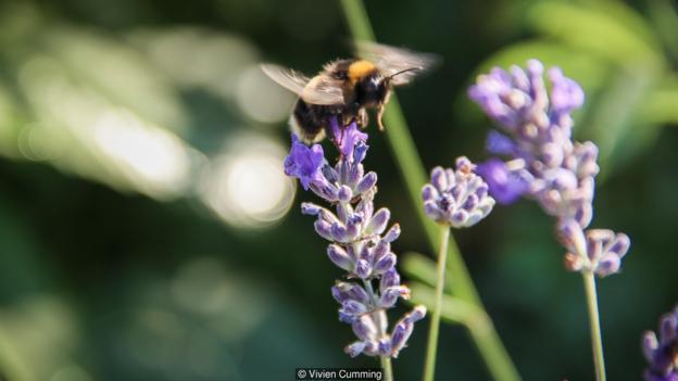 鸟类和蜜蜂的背后有什么样的演化故事?