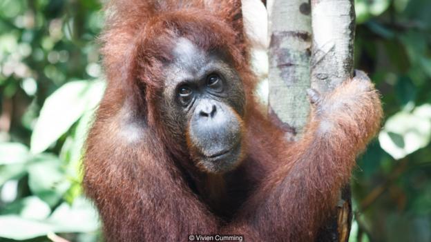 人类与猿类有共同的祖先