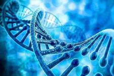中国基因编辑研究且快且急,看专家怎么说?
