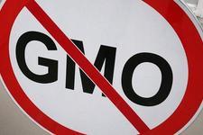 俄罗斯因转基因将限制从多国企业进口饲料