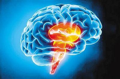 迄今最精确人类大脑图谱出炉 (新浪科技配图)