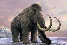 """科学家计划""""复活""""猛犸象:减慢温室效应"""