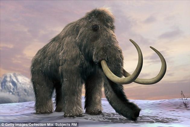 科学家表示,如果能将猛犸象复活、重新引入生态系统之中,或许就能将冻原重新变回草原,从而将永久冻土层与大气隔离开来,阻止温室气体的逃逸。猛犸象约在1万年前从地球上灭绝。