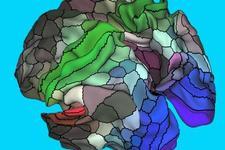 迄今最精确人类大脑图谱出炉:近百个大脑皮层区域首次亮相