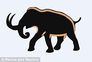 其次,人们需要增加亚洲象的皮下脂肪,帮助它们度过没有食物的时期,最后还要让它们长出厚厚的皮毛。
