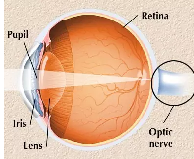 图为眼球的解剖结构。